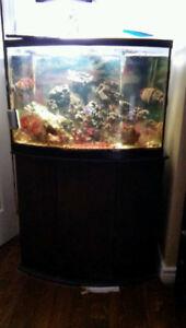 Saltwater 40 Gallon Bow Aquarium