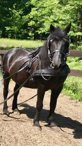 attelage de cheval
