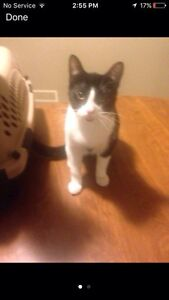Friendly Kitten looking for nice home.