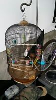 Bird cage suitable for budgies or finches