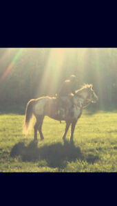 Looking for forever horse!!