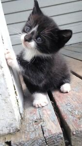 9 week old kitten looking for home