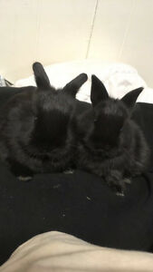 Baby bunnies looking for a new home!