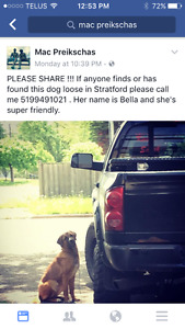 MISSING Dog - Bella. Please help!