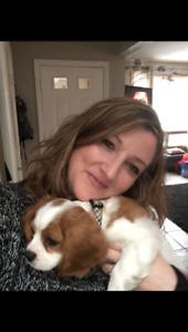 Experienced dog walker seeking clients