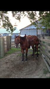 Finished heading horse