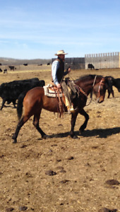 7 year old Ranch Horse