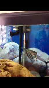 60 Gallon Fish Tank- 1 Year Old. Pumps & Accessories Included London Ontario image 3