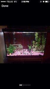 20 Gallon Fish Tank and Fish ( price reduced)