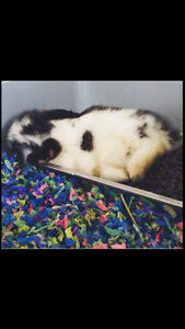 REHOMING FOR BUNNY (FREE)