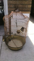 Bird cage for sale plus free two budgies