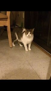 8 year old cat in need of loving home FREE