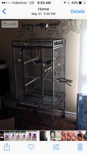Cockatiel avec grande cage