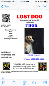 LOST DOG Golden Retreiver STILL SEARCHING