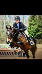 Gorgeous Mare for Part Board in Ancaster