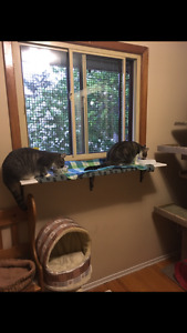 Cat boarding at very reasonable rates Cambridge Kitchener Area image 6