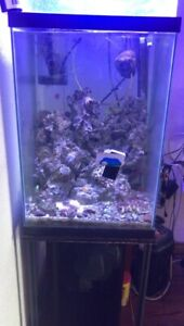 TALL FISH TANK FOR SALE, CAN TURN INTO A REPTILE TANK!