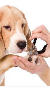 Service de coupe griffes animaux à domicile