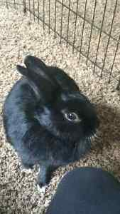 3yr old rabbit with kennels