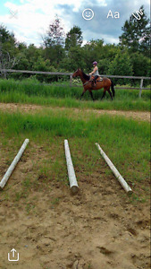Registered solid paint mare
