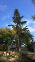 Tree Removal,  -- inexpensive,