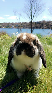 World's Best Bunny for Sale to a loving home !!