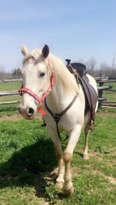 Free lease on Stunning Appy/Qh mare