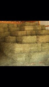 Horse hay $3 square bale