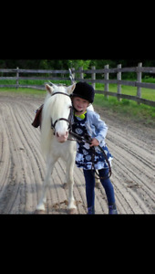 9 year old white pony for sale