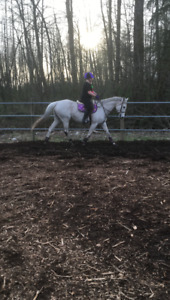 Mare for part lease