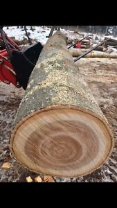 FIREWOOD LOGS 12ft lengths Pure Hardwood FREE DELIVERY