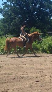 Super medium pony
