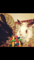 Cuddly Bunnies FREE to Good Home