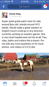 Grade paint mare for sale