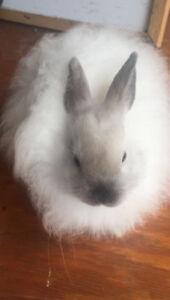 Baby Jersey Woolie bunnies