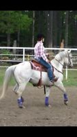 Dead Broke Been There Done That Geldings!!