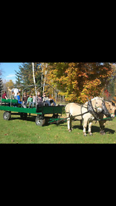 Horse wagon for sale.