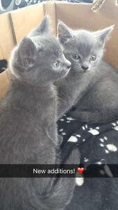 Missing grey kitten since September!!!