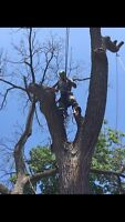 Reasonably priced tree removal and tree care