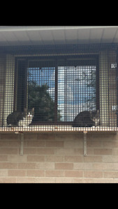 Cat boarding at very reasonable rates Cambridge Kitchener Area image 7