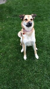 Ariel is ready for adoption!