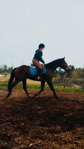 Gelding for part lease