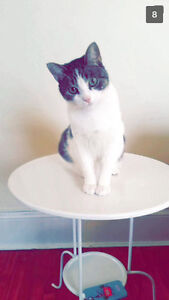 FREE 1 year old kitty needs home!!