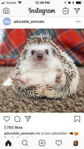 Looking for a hedge hog