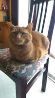 Lost Cat - Orange tabby - last seen by Hawkins & Ardagh Nov 15th
