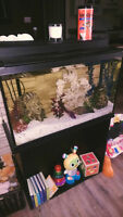 30 gallon fish tank and stand with fish
