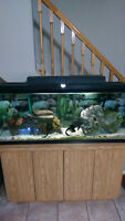 55 g fish tank with storage stand fish and accessories