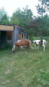 4year old gelded and 3year old Peterborough Peterborough Area image 4
