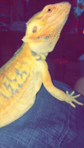 Looking to rehome your reptile,?