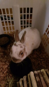 Bunny (male) found in Port Credit area